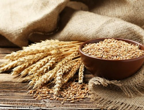 Poor Wheat Harvest Prompts Bread Price Hikes